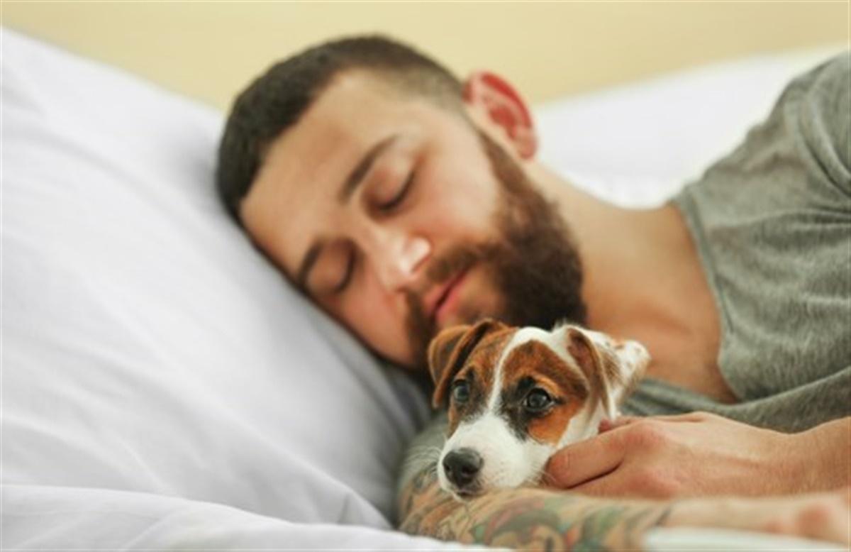 hund sover ikke om natten
