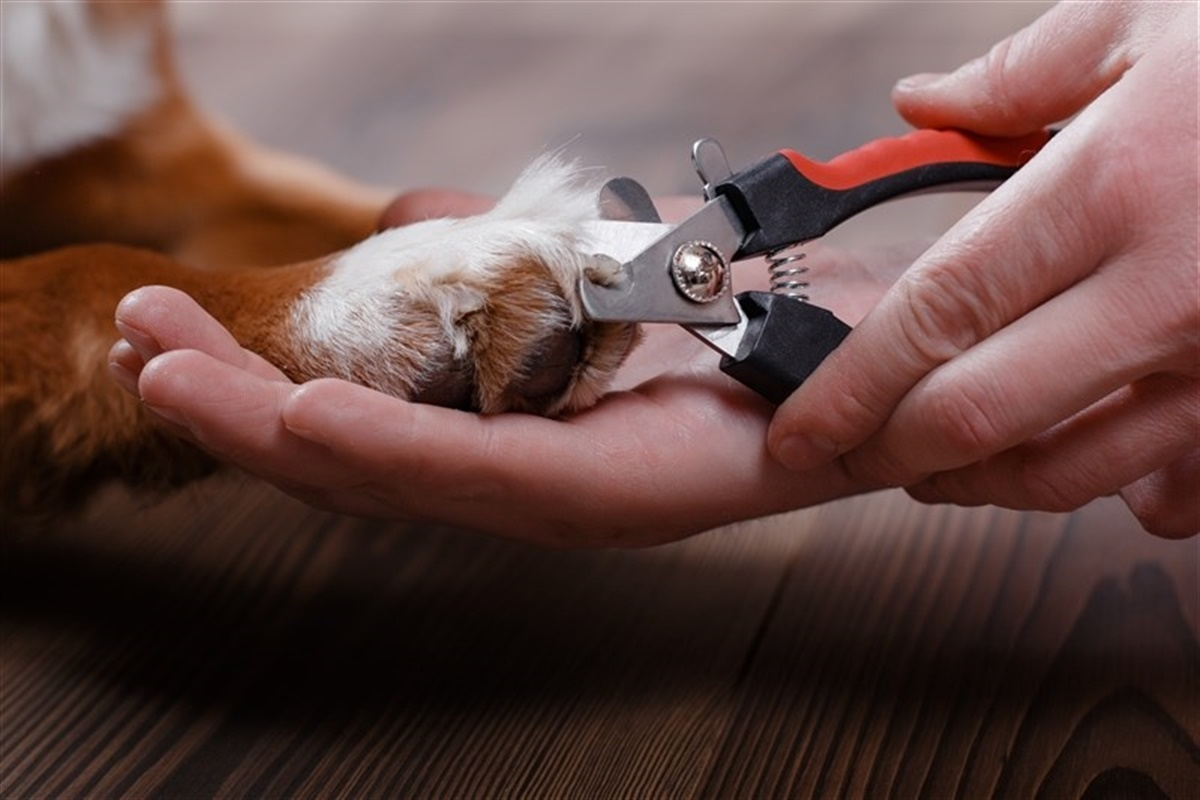 klippe negle på hund