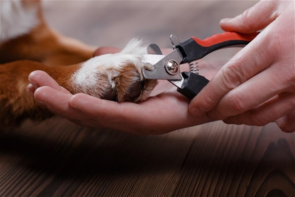 klip klør på hund