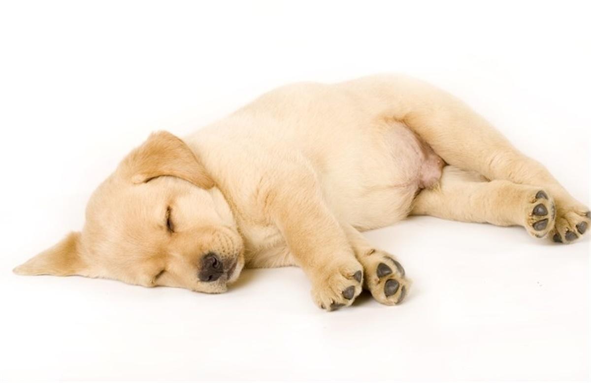 hund ligger på maven