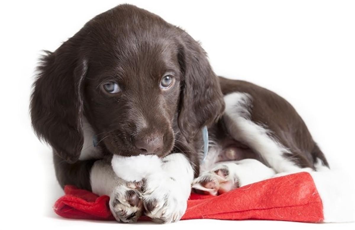 brækmiddel til hund