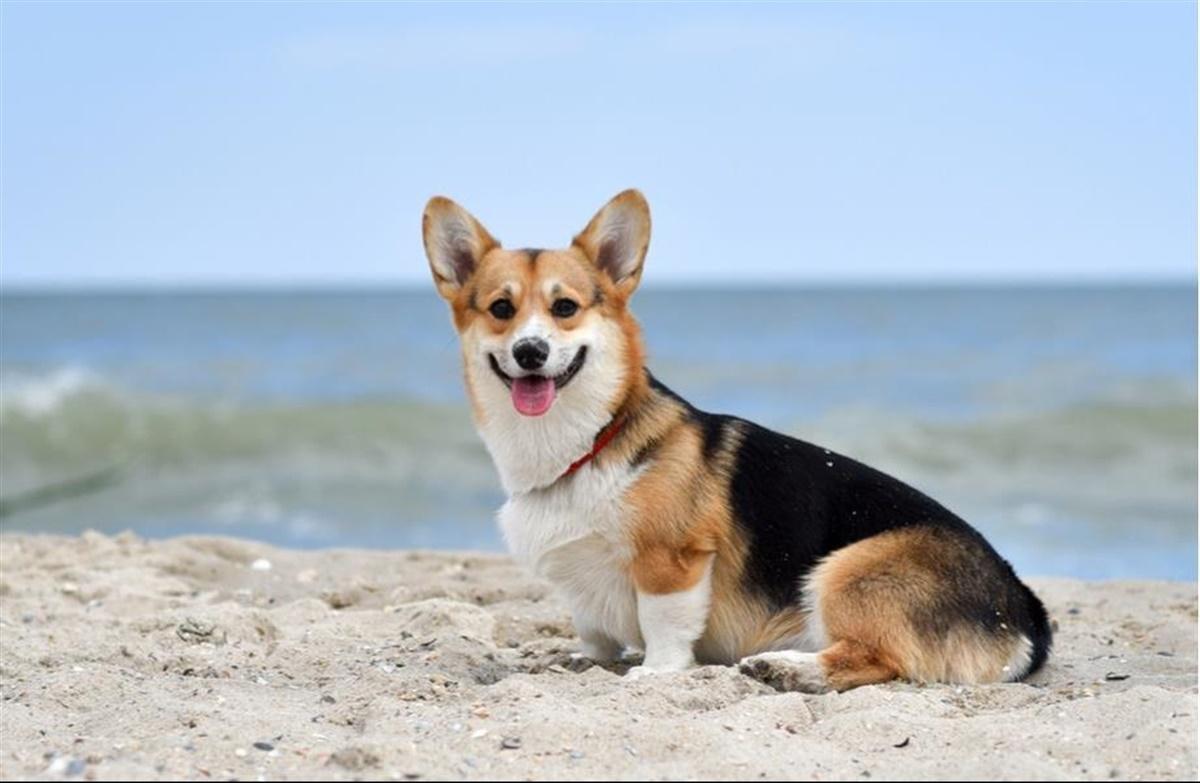 kemisk kastrering hund bivirkninger