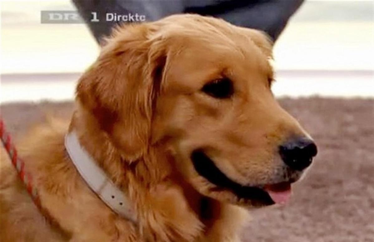 den gyldne hund