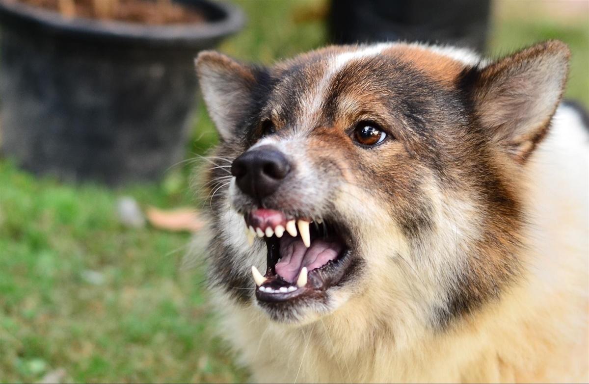 min hund er aggressiv overfor andre hunde