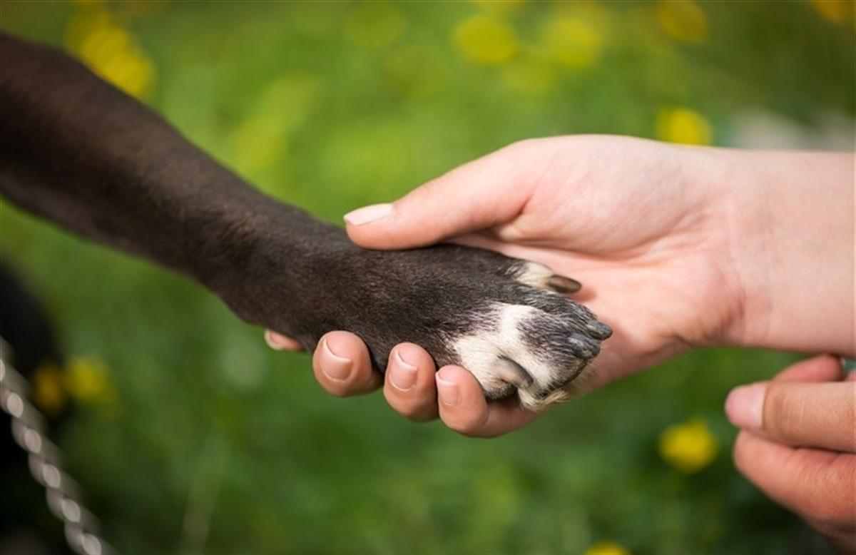 hvordan klipper man hundens negle