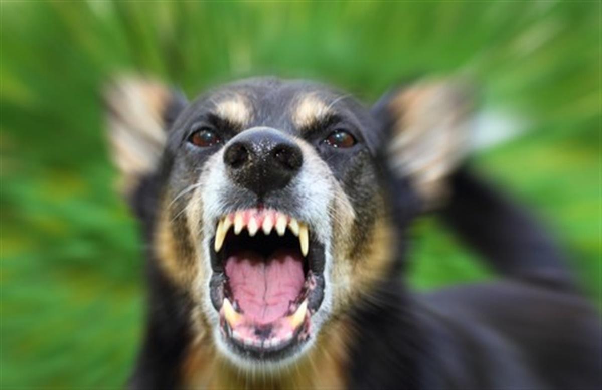 hund smerter