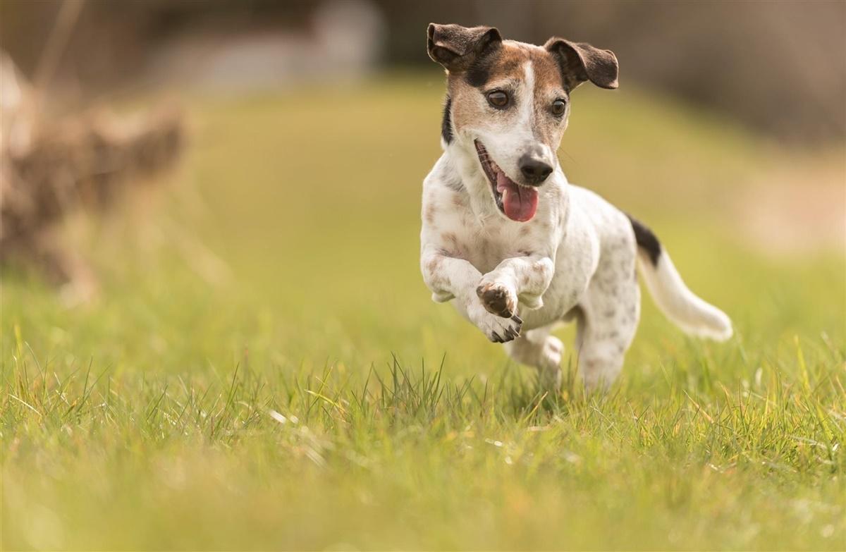 Hold Seniorhunden Frisk Hunden Dk
