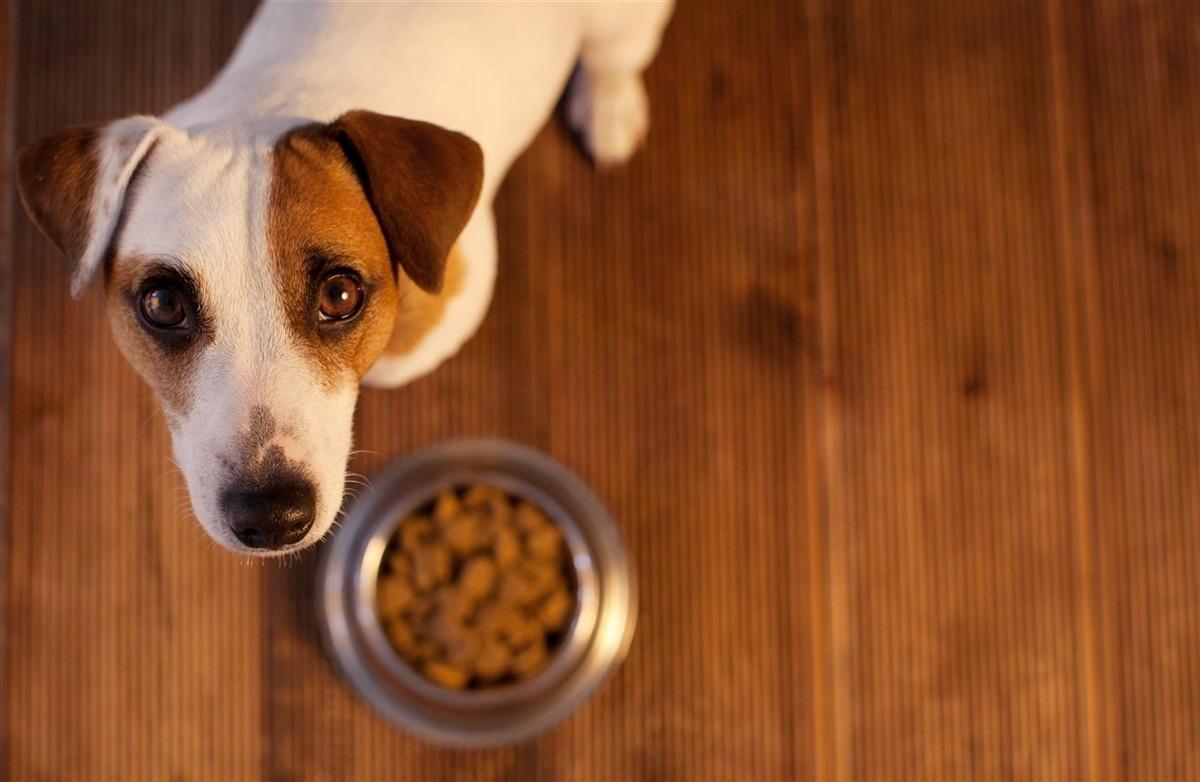 syg hund spiser ikke