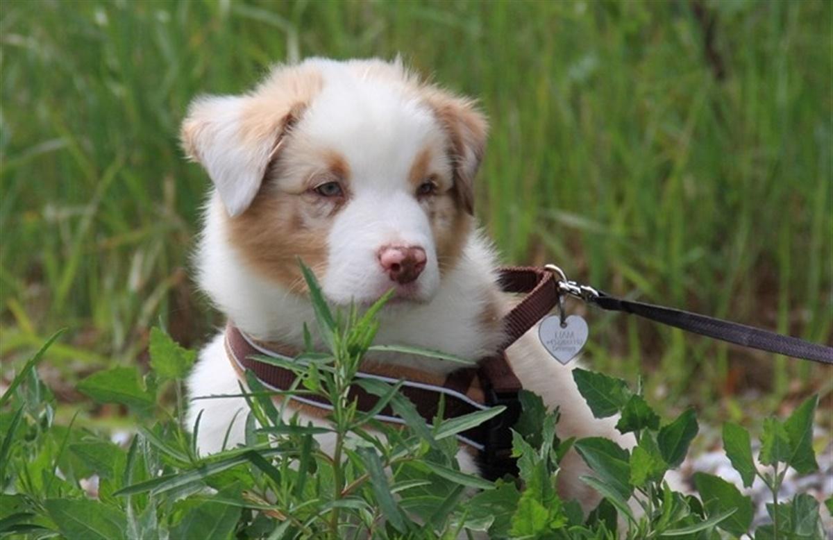verdens mest nuttet hund