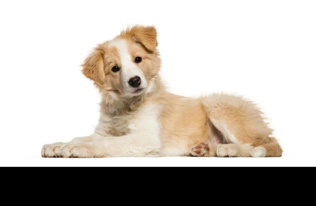 medicinsk kastrering hund bivirkninger