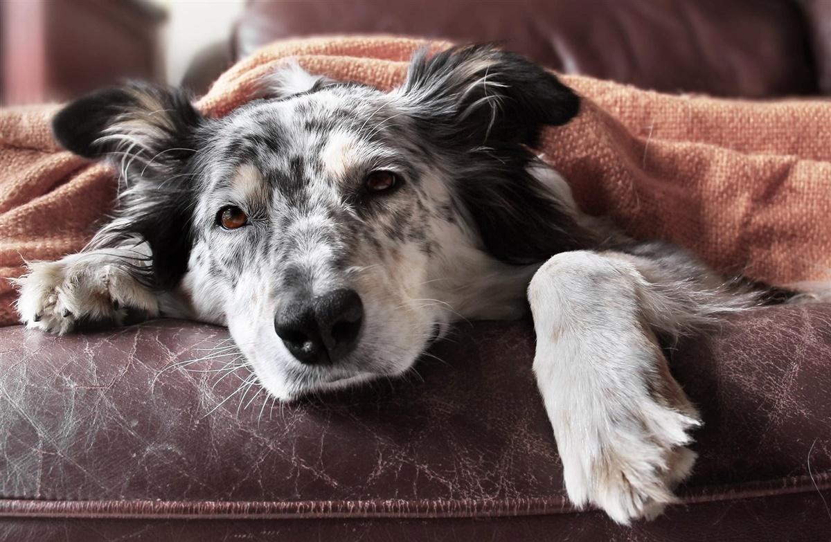 er min hund syg