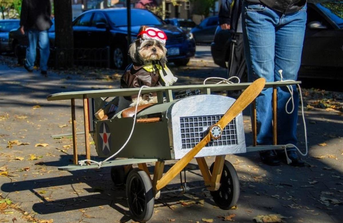 transport af hunde med fly