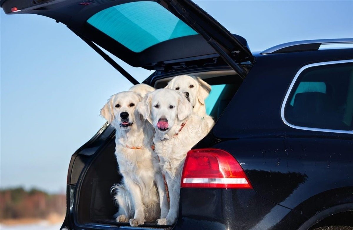 transport af hund i bil i sverige