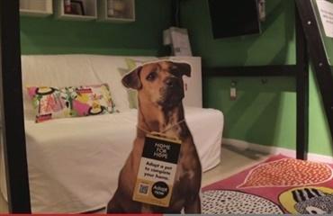 herreløse hunde købes