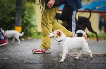 Splinternye England forbyder stødhalsbånd - Hunden.dk ZU-88