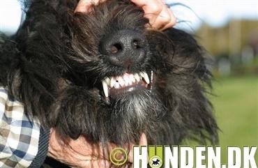 hvornår skifter hunde tænder