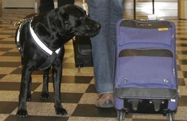 hund kabine 10 kg