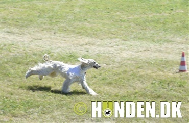 En weekend med Hunden i Fokus