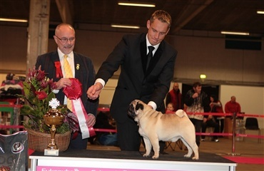 Mops blev Best in Show