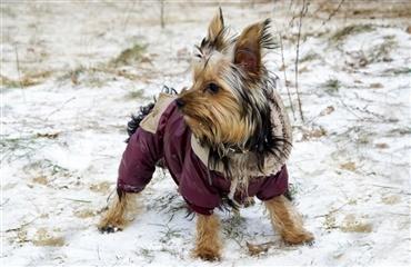 hund varme ører